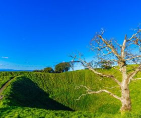 Auckland New Zealand Mount Eden Landscapes Stock Photo 01