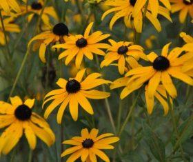 Autumn yellow daisy Stock Photo