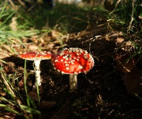 Brightly colored poisonous mushrooms Stock Photo 04