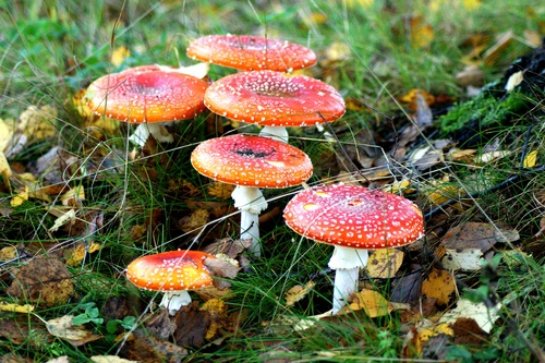 Brightly colored poisonous mushrooms Stock Photo 06