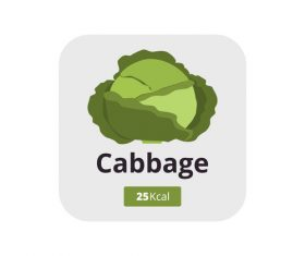 Cabbage vector icon