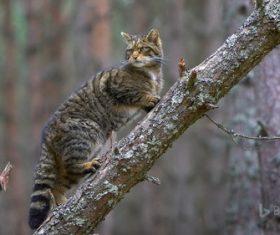 Cat climbing a tree Stock Photo