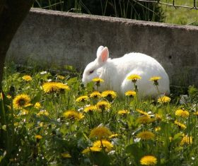Cute white rabbit Stock Photo 01