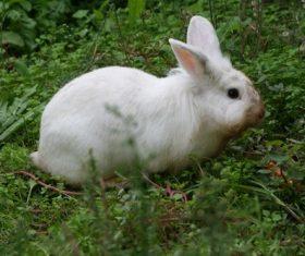 Cute white rabbit Stock Photo 02