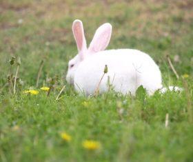 Cute white rabbit Stock Photo 03