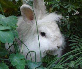 Cute white rabbit Stock Photo 04