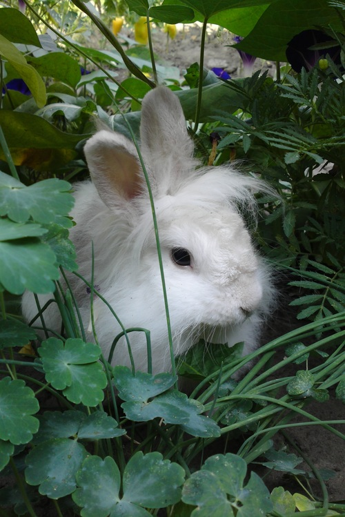 Cute white rabbit Stock Photo 04