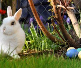 Cute white rabbit Stock Photo 05
