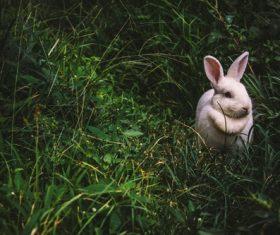 Cute white rabbit Stock Photo 06
