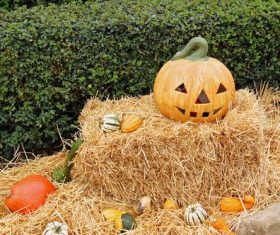 Halloween funny pumpkin lights Stock Photo 08
