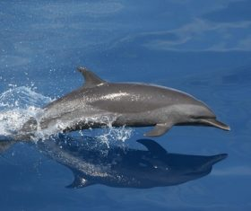 Lively and lovely dolphin Stock Photo 02
