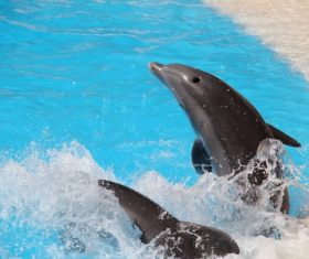 Lively and lovely dolphin Stock Photo 03