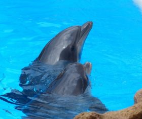 Lively and lovely dolphin Stock Photo 04