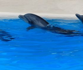 Lively and lovely dolphin Stock Photo 10
