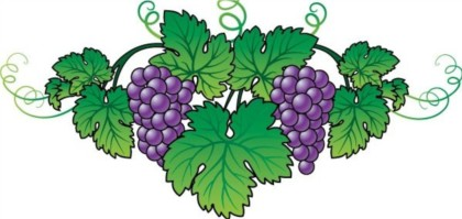 Purple grapes vector