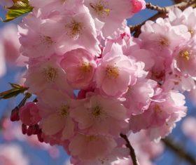 Quietly elegant plum Stock Photo 07
