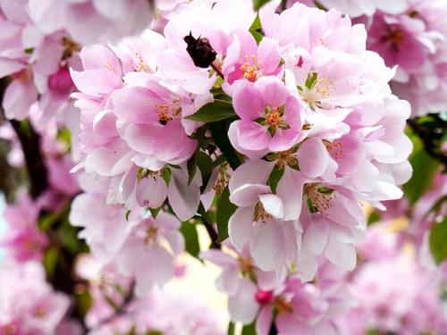 Quietly elegant plum Stock Photo 08