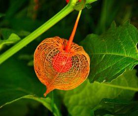 Stock Photo Beautiful wild berries