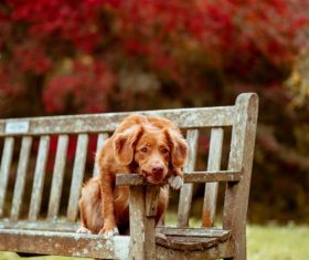 Stock Photo Dog on the bench