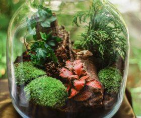 Stock Photo Homemade glass bottle micro landscape bonsai