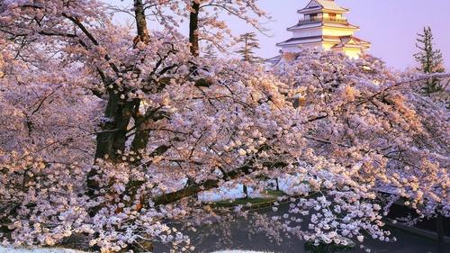 Stock Photo Japanese Aizuwakamatsu cherry blossom scenery
