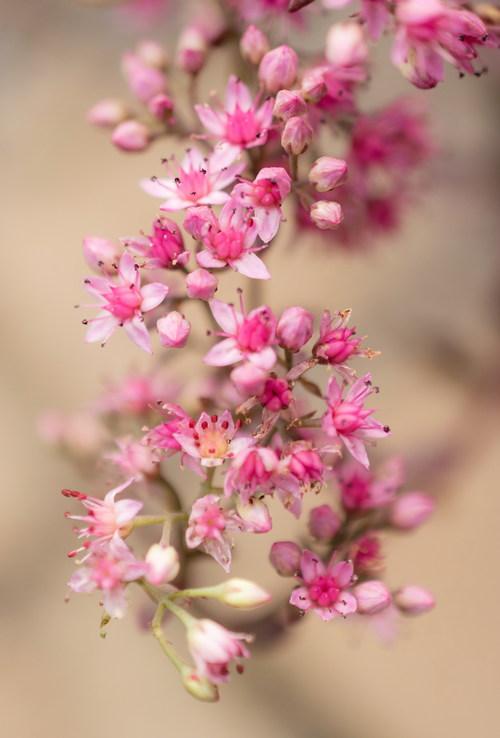 Stock Photo Macro Photography Beautiful Pink Flowers