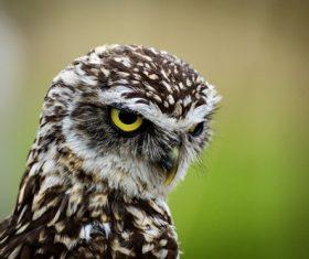 Stock Photo Owl close-up
