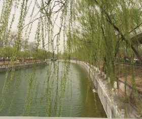 Stock Photo Weeping willow by the river 04