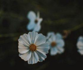 Stock Photo White gems flower closeup