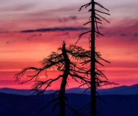 Stock Photo Withered tree and sunset red clouds