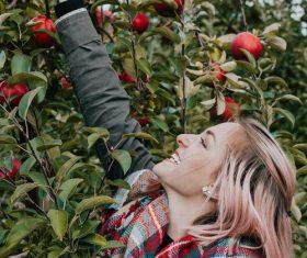 Stock Photo Woman picking apple