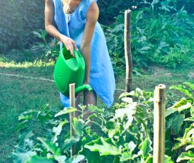 To vegetable watering woman Stock Photo