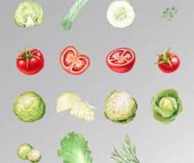 Vegetable part vector