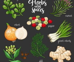 Vegetables and spices illustration design vector 04