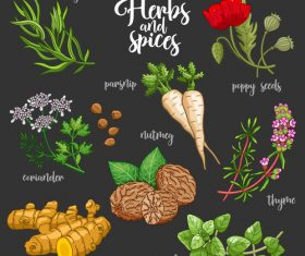 Vegetables and spices illustration design vector 05