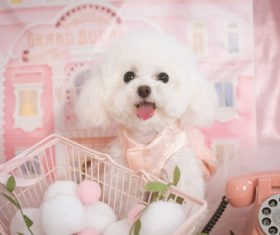 White Teddy dog Stock Photo 10