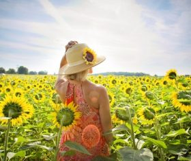 Woman in sunflower field Stock Photo