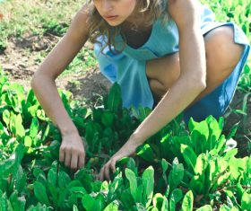 Woman picking vegetables Stock Photo 01