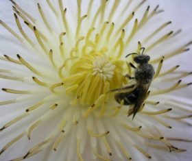 bee collecting nectar Stock Photo 10