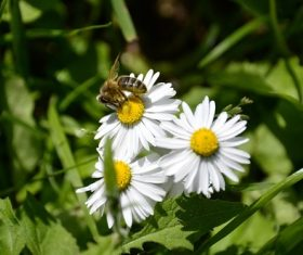 bee collecting nectar Stock Photo 11