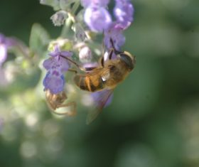 bee collecting nectar Stock Photo 12