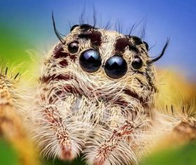 jumping spider Stock Photo 04