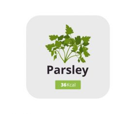 parsley vector icon