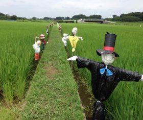 scarecrow Stock Photo 02