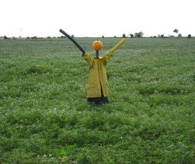 scarecrow Stock Photo 03