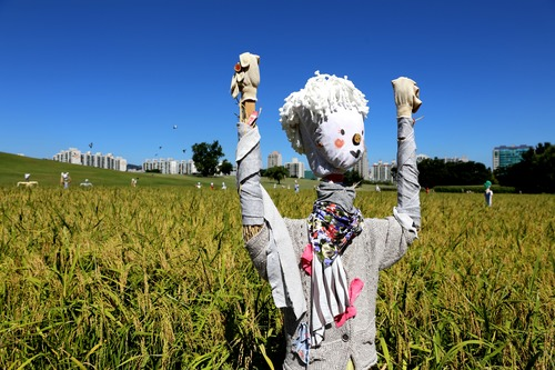 scarecrow Stock Photo 05