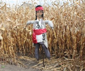 scarecrow Stock Photo 06