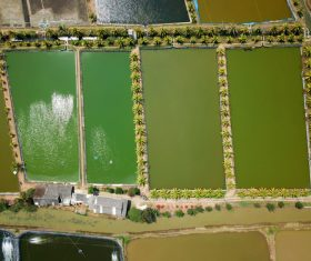 Aerial photography farmland Stock Photo 08
