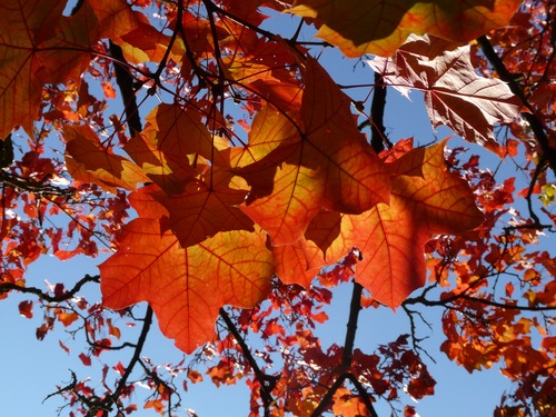Beautiful maple leaf Stock Photo 02