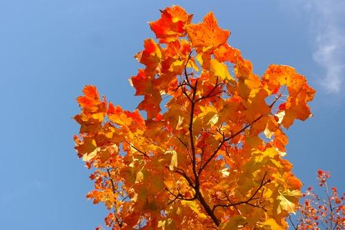 Beautiful maple leaf Stock Photo 04
